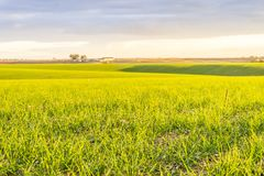 Landscape with fresh green fields by sunset, Portugal. Beautiful green and yellow fields in agricultural Alentejo, South Portugal Stock Photos