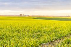 Landscape with fresh green fields by sunset, Portugal. Beautiful green and yellow fields in agricultural Alentejo, South Portugal Royalty Free Stock Image