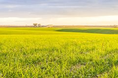 Landscape with fresh green fields by sunset, Portugal. Beautiful green and yellow fields in agricultural Alentejo, South Portugal Stock Image