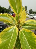 Beautiful greenery plant in parking stock images