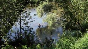 Beautiful greenery and river stock video