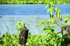 Beautiful greenery tropical river Stock Image