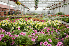 Beautiful Greenhouse interior with different types of flowers Stock Photo