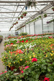 Beautiful Greenhouse interior with different types of flowers Royalty Free Stock Photos