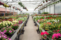 Beautiful Greenhouse interior with different types of flowers Royalty Free Stock Photo