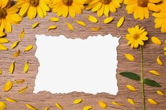 Beautiful greeting card. Flower arrangement. Calcined decorative sheet of white paper surrounded by yellow flowers and petals. Creating a creative summer card on Stock Images