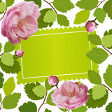 Beautiful greeting card with a frame of spring roses flowers. 3d roses. Vector illustration. Beautiful greeting card with spring roses. Vector illustration. 3d Stock Photography