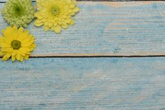 Beautiful greeting card to the woman`s day. Yellow and green flowers on the blue wooden background. View from top. Space for text. royalty free stock photos