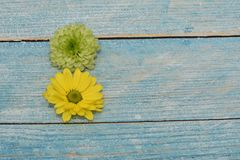 Beautiful greeting card to the woman`s day. Yellow and green flowers on the blue wooden background. View from top. Space for text. royalty free stock images
