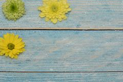 Beautiful greeting card to the woman`s day. Yellow and green flowers on the blue wooden background. View from top. Space for text. stock image