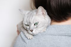Beautiful grey cat Royalty Free Stock Images