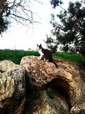 A beautiful grey cat on an old olive oil mill stone royalty free stock image