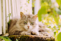 Beautiful grey cat lying on the bench outdoor Stock Image