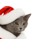 Beautiful grey cat in a New Year's cap Royalty Free Stock Photo