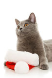 Beautiful grey cat in a New Year's cap Stock Image