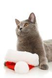 Beautiful grey cat in a New Year's cap Stock Image
