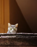 Beautiful grey cat on old window looking down Stock Images