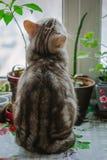 Beautiful grey cat sitting on the window sill and looking to window. Beautiful grey cat sitting on the window sill and looking to window stock photo