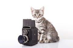 Beautiful grey cat Stock Images