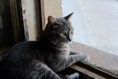 Beautiful grey cat on a windowsill and looking to Royalty Free Stock Photos