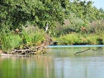 White heron bird resting on tree branch, Lithuania Stock Photo