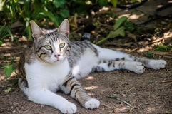 Beautiful grey and white cat enjoy noon sunshine in garden Stock Photos