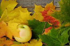 Beautiful grey wooden background with autumn leaves and apple Stock Photography