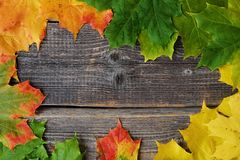 Beautiful grey wooden background with autumn leaves Royalty Free Stock Photography