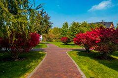 Free Beautiful Groomed Walkways In The Park. Trees With Red Leaves Grow In The Park Stock Image - 171870661