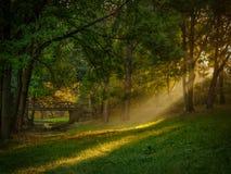 Beautiful grove Stock Photos