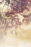 Beautiful grunge autumnal background Stock Images