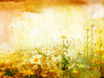 Beautiful grunge background with daisies Stock Photos