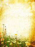 Beautiful grunge background with daisies Royalty Free Stock Photo