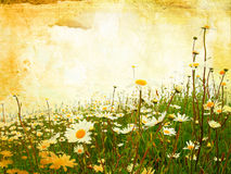 Beautiful grunge background with daisies Royalty Free Stock Photography