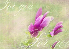 Beautiful grunge background with magnolia flowers.  For you card Royalty Free Stock Photos