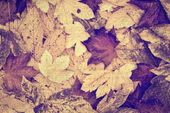 Beautiful grunge retro autumn leaves collage background Royalty Free Stock Images