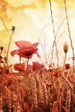 Beautiful grungy background with poppies Stock Photo