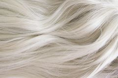 Beautiful hair. Long curly blonde hair. Color in light ash blonde. royalty free stock image
