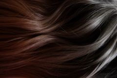 Beautiful hair. Long curly dark hair. Coloring with gradient from red to black. stock image
