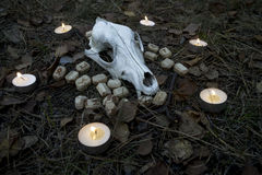 Beautiful halloween composition with runes, skull, tarot  and candles on the grass in dark autumn forest. Ritual Stock Image