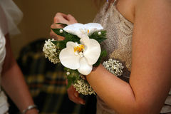 Beautiful hand bouquet for bridesmaids Stock Image