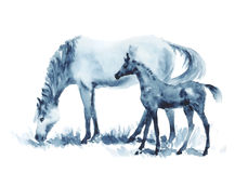 Watercolor mare and foal on white. royalty free illustration