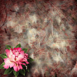 Beautiful hand drawn rose branch and sheet of paper Royalty Free Stock Photos