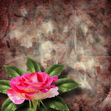 Beautiful hand drawn rose branch and sheet of paper Stock Photography