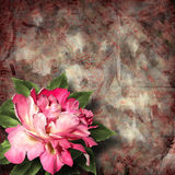 Beautiful hand drawn rose branch and sheet of paper Royalty Free Stock Images