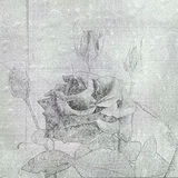 Beautiful hand drawn rose on the cement wall. Royalty Free Stock Images