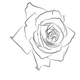 Beautiful hand drawn sketch rose, isolated black contur on white background. Botanical silhouette of flower Stock Photo