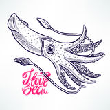 Beautiful hand-drawn squid Royalty Free Stock Images