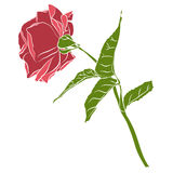 Beautiful hand drawn stencil rose, isolated on white background. Botanical silhouette of flower Royalty Free Stock Image