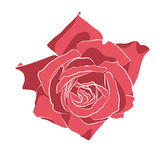 Beautiful hand drawn stencil rose, isolated on white background. Botanical silhouette of flower Stock Photography